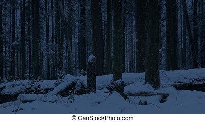 neigeux, sombre, déplacer au-delà, forêt
