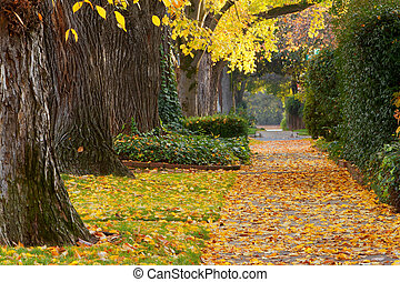 Neighborhood sidewalk in autumn with trees and bushes