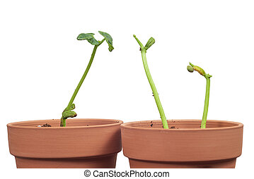 Neighbors Visiting Young Plants Against White Background