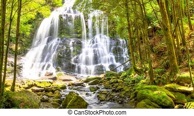 Nelson Falls Tasmania - Nelson Falls, in an area of...