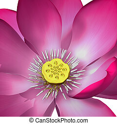 Nelumbo is a genus of aquatic plants with large, showy ...