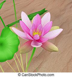 Nelumbo (Lotus) - Nelumbo is a genus of aquatic plants with ...