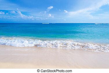 nemes, lenget, képben látható, a, sandy tengerpart, alatt,...