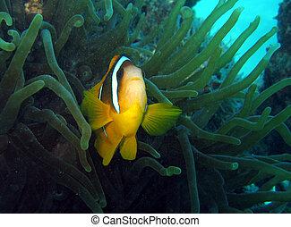 Nemo is found #2