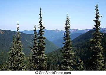 nemzeti erdő