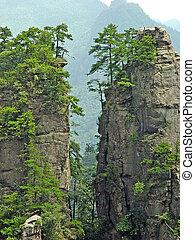 nemzeti park, erdő