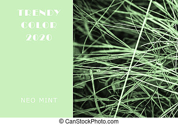 Neo Mint grassy lawn. Juicy tones in a new mint color. Abstract light green background with vibrant colors. Copy space layout for design.