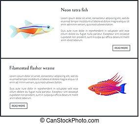 Neon Tetra Fish and Flasher Vector Illustration - Neon tetra...