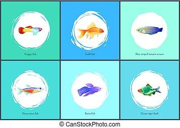 Neon Tetra Fish Blue Tamarin Vector Illustration - Neon...