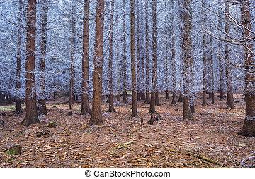 neposkvrněný, jehličnatý, zima, fešný, les, větvit, zamrzlý
