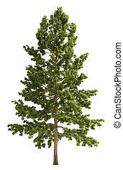 neposkvrněný, strom, osamocený