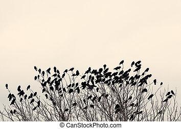 nero, ravens, ramo, albero