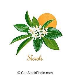 Neroli. bitter orange tree, twig, flowers and fruit -...