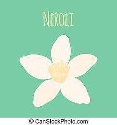 Neroli flower, oil plant, essential cosmetics. Vector illustration
