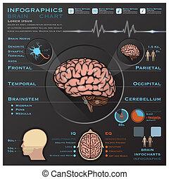 nervös, läkar system, hjärna, infographic, infochart