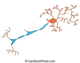 nerve cell on the white background