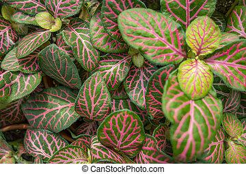 nerve plant closeup