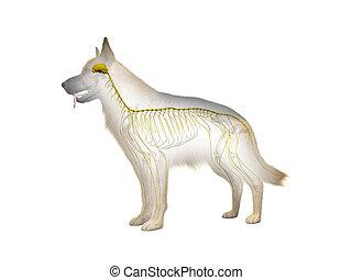nervioso, canino, sistema