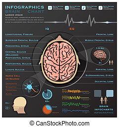 nervioso, sistema médico, cerebro, infographic, infochart