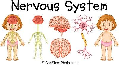 nervosa, pequeno, sistema, menina