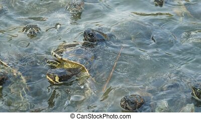 Nervous little reptiles swimming and creeping on seashore on...