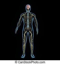 Nervous system - The nervous system is the part of an...