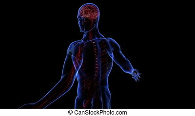 Nervous system - Transition body - nervous system - body....