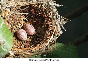 Nest and eggs 2