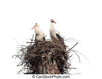 nest, baum, storks., freigestellt, hintergrund., zwei,...