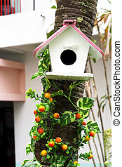 Nest box bird house for birds.