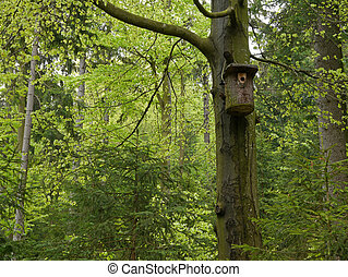 nest box for birds in the wood