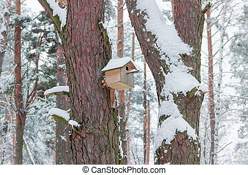 Nest box in winter forest - Nest box on the pine trunk in...