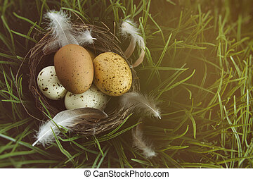 nest, gras, eier, gesprenkelt