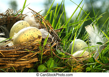 Nest in the grass with eggs