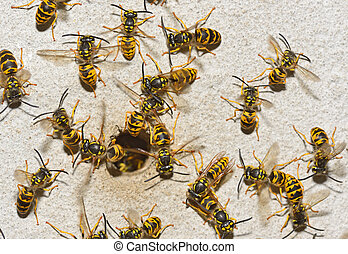 Nest of a family of wasps