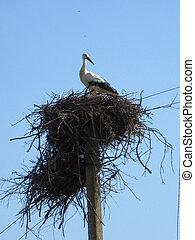 Nest of storks in village
