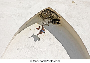 Nest of swallows in the arch of the building