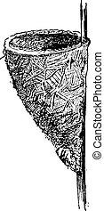 Nest of the Wren or Troglodytes sp., vintage engraving