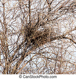 nest on a tree