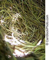 Nest on the tree, close up