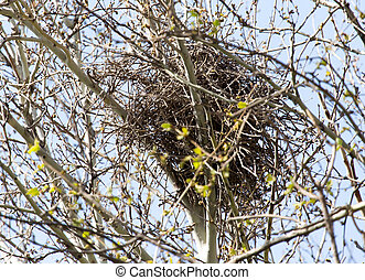 nest on the tree in nature