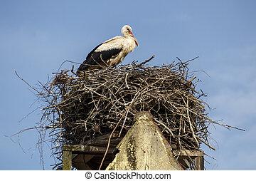 nest, stork's, 2017, ruehstaedt, deutschland