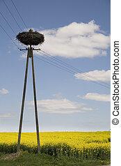 nest, stork's