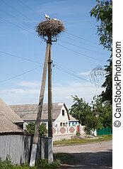 nest, straße, stork's, dorf