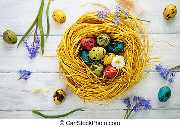 Nest with quail eggs. Top view