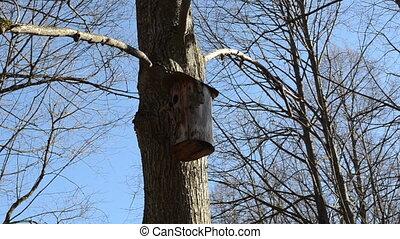 nesting box hanging - beautiful the tree bark made nesting...