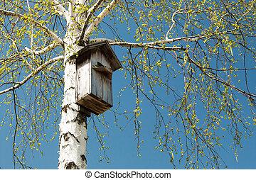 Nesting box on the tree bright sunny day blue sky