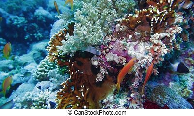 Net Fire Coral Millepora dichotoma , Glare of sunlight on ...