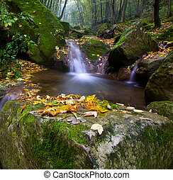 net forest brook flows into the dead wood