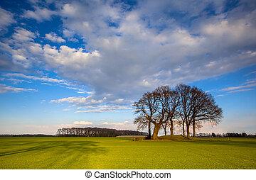 netherlands, 有色人種, 春, 木, 明るい, 風景